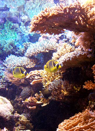Fish in front of a coral reef